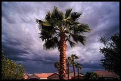 CLOUDS 9302018 01 (Street X Shooter) Tags: clouds palmtrees