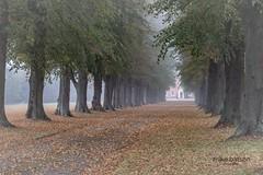 Misty Autumn Mornings (Mike Batson) Tags: landscapeview landscapephotography landscapephoto landscape countryside country treeline trees season autumnseason mistymorning misty autumnmorning autumn fog mist copyrightmikebatson