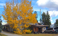 Be_It_Ever_So . . . (Guyser1) Tags: building house home tree aspen westyellowstone canonpowershots95 pointandshoot