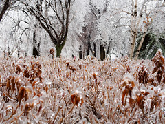 Perfect coating (GardenOfEarthlyDelights) Tags: canada ontario places thorncliffepark toronto freezingrain ice icestorm