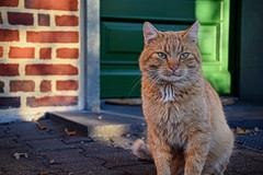 Joshi (Kai Beinert) Tags: cat katze pat animal stillife stilleben house door tür building farm hof haustier tier looking waiting wall buliding colourful beauty eyes kitten cute kitty lovely nikon cats