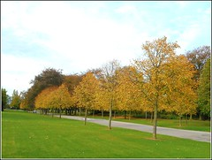 Tree Line-Up ... (** Janets Photos **) Tags: uk hull publicparks trees autumncolours