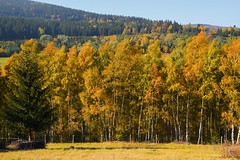 colours of the autumn (JoannaRB2009) Tags: colours colora autumn fall nature landscape view golden yellow hills mountains sudety lowersilesia dolnyśląsk polska poland tree trees birch
