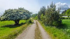 2015.05.29 (20)  Ostseeradweg Rügen --  von Sassnitz - Prora - Baabe - Binz - Sellin - Putbus nach Gartz (gerhard_hohm) Tags: rügen ostseeinsel vorpommern mecklenburgvorpommern ostseeküste ostseeradweg sassnitz prora baabe binz sellin putbus gartz lancken granitz
