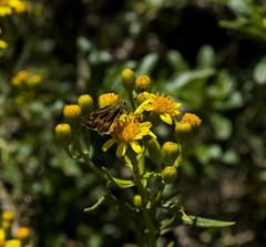 (Luis Fer Barriales) Tags: mariposa butterfly papillon borboleta paisaje landscape paysage paisagem naturaleza nature natureza sañayca aymaraes apurímac peru