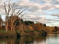 The lake in Autumn (saxonfenken) Tags: 7324lake 7324 autumn fall lake deadtrees clouds trees challengeyouwinner gamewinner