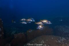 IMG_1466 (davide.clementelli) Tags: diving dive dives padi immersione immersioni ampportofino portofino liguria friends amici underwater underwaterlife sottacqua