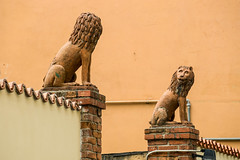 Tell me something about you (st-bruehne) Tags: pisa italia skulpturen sculptures lions löwen