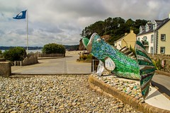 Photo of Bertie the Bass, Amroth, Pembrokeshire, Wales