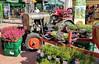 Eicher Diesel luftgekühlt (John Steam) Tags: traktor oldtimer vintage tractor eicher diesel bayern germany 2018 blumen herbstliche flowers luftgekühlt schlepper gärtnerei