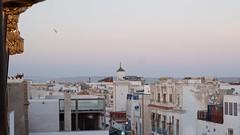 View from rooftop over Essaouira (pan_orama) Tags: marokko maroc morocco essaouira beach harbour seagulls fish sun color travel