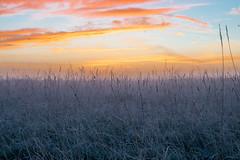 _DSC9493.jpg (thomasresch) Tags: sonneaufgang sun nordhaide panzerwiese nebel hartelholz sunrise sonne