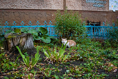 hd_20181011114617 (anatoly_l) Tags: russia siberia kemerovo city fall october 2018 autumn cats