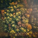 Autumn from above thumbnail