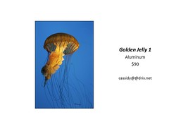"Golden Jelly 1 • <a style=""font-size:0.8em;"" href=""https://www.flickr.com/photos/124378531@N04/44449290595/"" target=""_blank"">View on Flickr</a>"