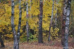Київ, осінь, Гідропарк 224 InterNetri.Net Ukraine (InterNetri) Tags: україна київ гідропарк осінь ukraine internetri qntm