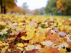 (docwiththecamera) Tags: autumn leaf leaves color sky ground tree park fall colors colourful