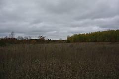 IMG_6336 (sjj62) Tags: fishcreekwi doorcountywi fall autumn woods doorcounty fishcreek 40d