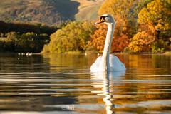 Gartmorn - 14 Oct 2018 - 18.jpg (ibriphotos) Tags: woodland alloaharbour blue sunset river alloa clackmannanshire riverforth trees gartmorndam leaves orange autumn evening goldenhour sky sunsets
