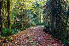 ROSH6620-Edit.jpg (Roshine Photography) Tags: water autumn leaves fallcolours colours plants cookcreek trees nanaimo britishcolumbia canada ca