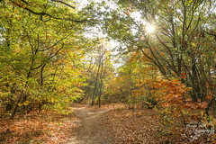 Sunny Forest (Amanda Blom Photography) Tags: forst bos nature natuur naturelover naturephotographer naturepicture naturephoto natuurfoto naturephotography natureptohography naturelove groen green colors leafs branches takken bladeren canon canonphoto