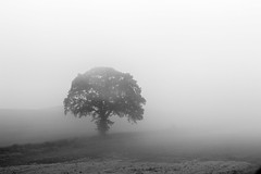 I Stand Alone (Carolin de Verdier) Tags: tree mist bw blackandwhite sweden scania sverige skåne söderåsen billinge ask träd dimma svartvitt sv