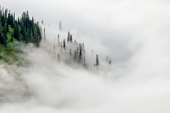 Ethereal (FJMaiers) Tags: pines trees clouds engulfed nikon glaciernationalpark ethereal inversion heavenly forest mountainside
