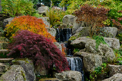 Autumn Rock Garden (Stephen Reed) Tags: rhswisley autumn plants surrey england naturalbeauty nikon d7000 lightroomcc