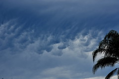 Mammatus Clouds (Dreaming of the Sea) Tags: clouds palmtrees tamronsp2470mmf28divcusd nikond7200 sky storm blackcloud