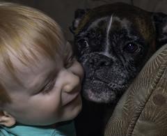 Thomas&GizmotheBoxer_SAF8303-2 (sara97) Tags: copyright©2018saraannefinke missouri photobysaraannefinke saintlouis gizmotheboxer dog canine pet