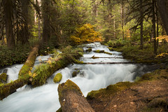 Fall color at Olallie Creek, Oregon (icetsarina) Tags: saariysqualitypictures olalliecreek oregon foliage
