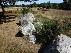 L'alignement de menhirs de Forgerais à Saint-Just - Ille-et-Vilaine - Septembre 2018 - 06 (Erwan Corre) Tags: mégalithe menhir illeetvilaine bretagne france quartzite quartz saintjust stjust cojoux landesdecojoux forgerais alignement