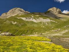 032 - un oasi di pace (TFRARUG) Tags: formazza valrossa mut brunni alps alpi mountains montagne trekking landscapes toggia sangiacomo