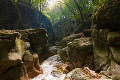 Gaja-creek (bakosgabor57) Tags: creek stones canyon gully nikon d7200 tokina1116 trees moss