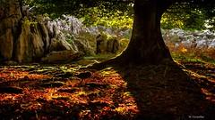 En el hayal (Carpetovetón) Tags: haya hayedo hayal hojas hierba árbol bosque colores contraluz contraste rocas sonynex5n paisaje