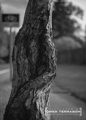 Trunk - 42 (oterrason) Tags: tree trunk treetrunk street walkabout blackandwhite monochrome monochromatic nature sidewalk trail fujinon fuji film fujinon35cmf2ltm m39 ltmtomadapter mmountadapter fujifilmxpro2 xpro2
