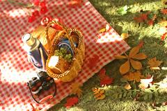 Autumn picnic (kinmegami) Tags: integrity toys barbie autumn fall picnic polymerclay doll mattel fashionroyalty rement handmade asianvintagetablewareset pokemonpikachucampingset3 momoyasstylishreciperementno04 europeangourmettourrestaurantbreadandbasket supermarketsetno07