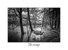 Swamp (<Derek>) Tags: delamereforest delamere forest swamp trees monochrome mono blackandwhite bw