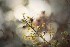 迷幻復古的花色 (Curitis Chen) Tags: sony sonyalpha sonya7ii flower