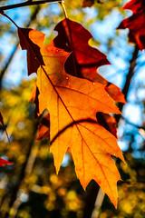 Autumn leaf (Ewelina Jaminska) Tags: leaf leaves sun light brown orange yellow beauty beautiful autumn fall polska poland warszawa varsovie varsovia polonia pologne nature natural natura