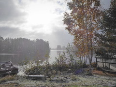 Snow falling on birches in sunshine (yooperann) Tags: upper peninsula michigan snow birch tree yellow leaves sunshine misty marquette county gwinn