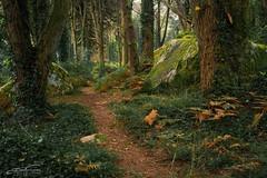Inside... (jorgeverdasca) Tags: goth trees 5dmark4 canonphotos autumn outono woodland forest floresta mist sintra portugal