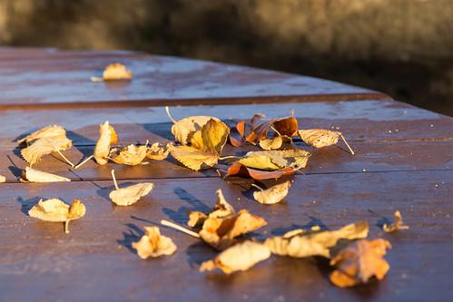 Tharandt - Autumn in Saxony