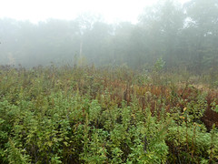 P1020157 (rpealit) Tags: scenery wildlife nature weldon brook management area