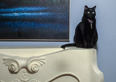 The Deep South (swampzoid) Tags: blue moody spooky black blackcat panther sitting perched upon interior mantel fireplace wall painting deepsouth