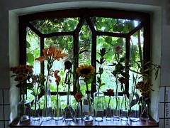 KEUKENVENSTERBANK || FLOWERS IN OCTOBER (Anne-Miek Bibbe) Tags: keuken kitchen raam window windowsill vensterbank bloemen bloei flowers flor flores bloom blumen fleur fleurs fiori fioritura annemiekbibbe bibbe nederland 2018 appleiphone6splus