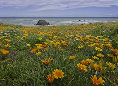 South Coast - Spring is here (dave.fergy) Tags: coast summer beach clouds blue colourful spring green orange yellow