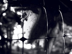 Abstraction. Macro. Monochrome. (ALEKSANDR RYBAK) Tags: абстракция макро крупный план монохромный свет тень чёрное белое abstraction macro closeup monochrome shine shadow black white