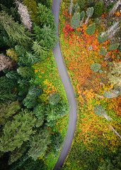 Never Stop Changing (John Westrock) Tags: nature road trees autumn fall snoqualmiepass washington unitedstates us fallcolors autumncolors forest djimavicpro2 dronephotography pacificnorthwest