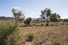 View near Old Moxans Hut (oz_lightning) Tags: australia canon6d canonef1635mmf4lis flindersranges sa willowspringsstation landscape nature southaustralia aus